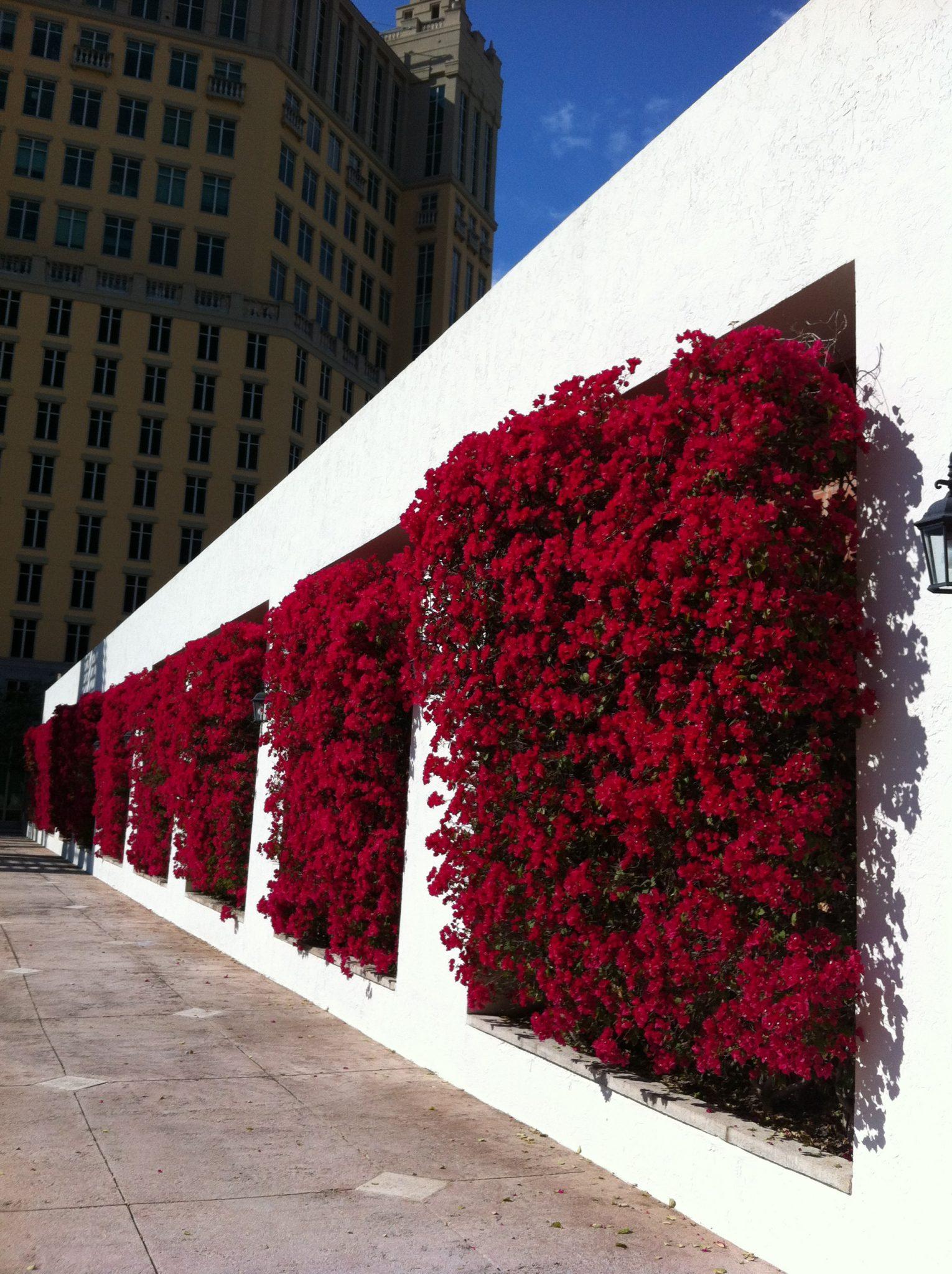decoração muro externo