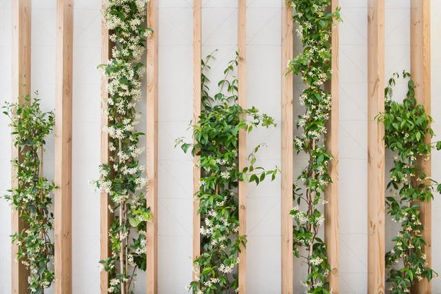 muros decorados com plantas fotos