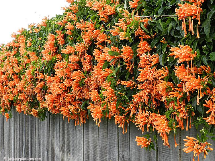 plantas para decorar muros
