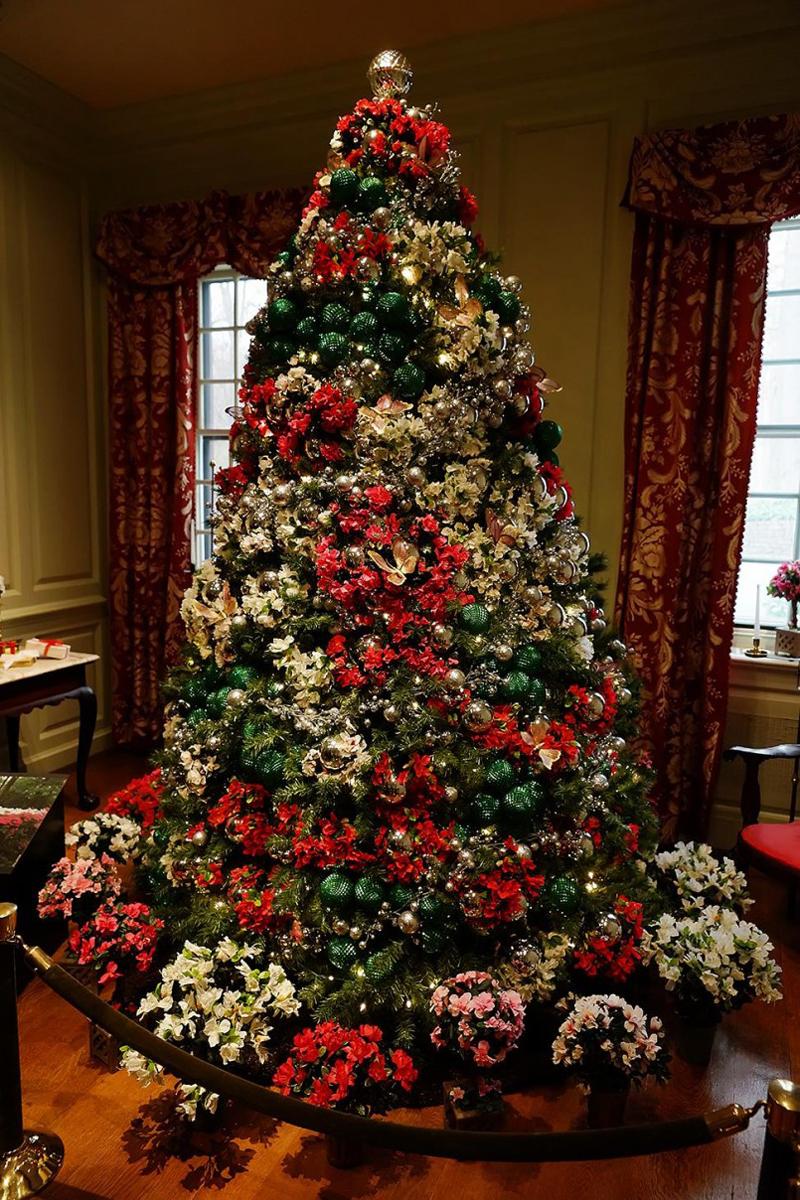 pinheiro natalino flor