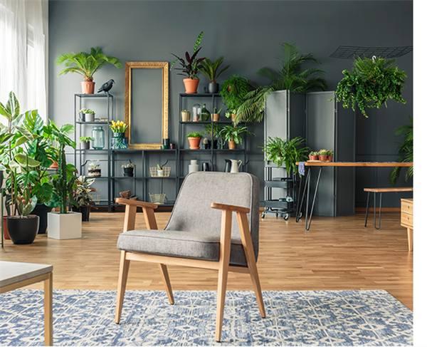 Floresta urbana em apartamentos