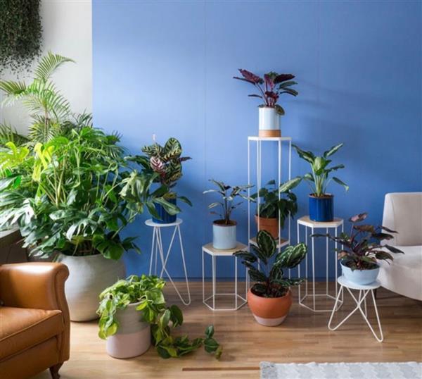 plantas para cultivar em apartamento