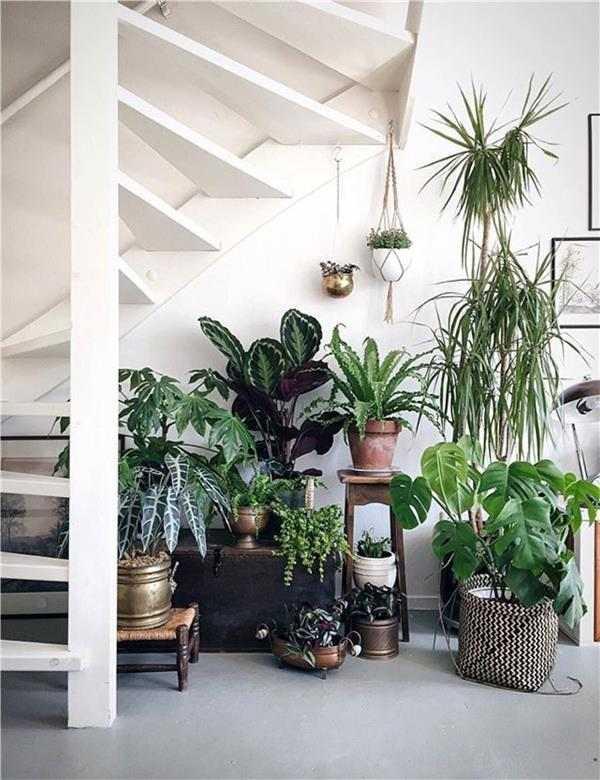 urban jungle debaixo da escada