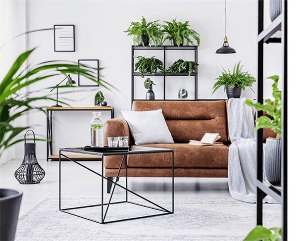 Tipos de plantas para sala de estar
