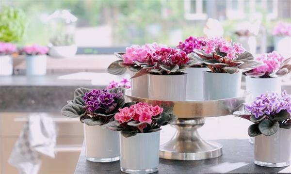 decoração com violetas