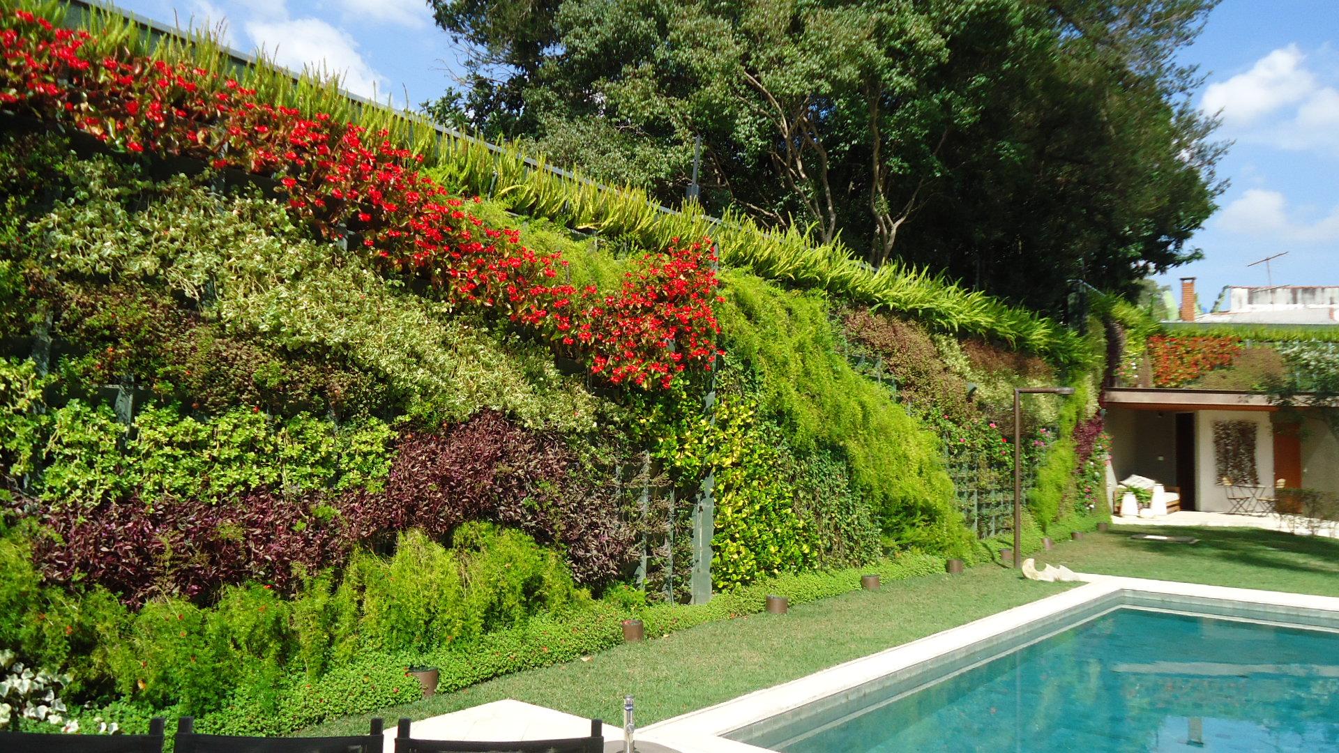 60 fotos de muros decorados com plantas On que planta para muro exterior vegetal