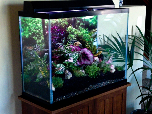 minijardim em aquário