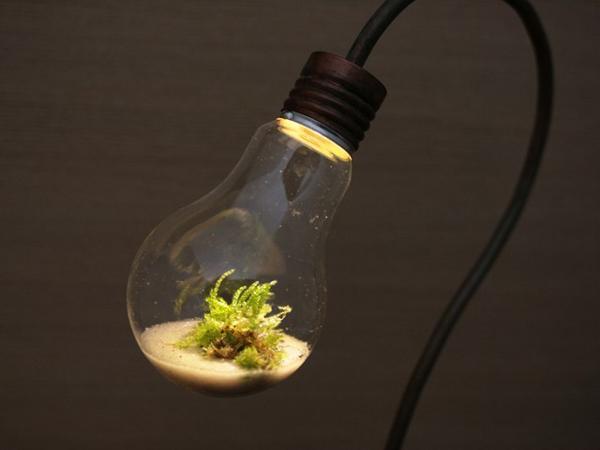 minijardim na lampada com luz
