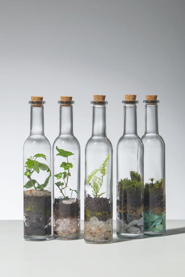 garrafas de vidro com minijardim