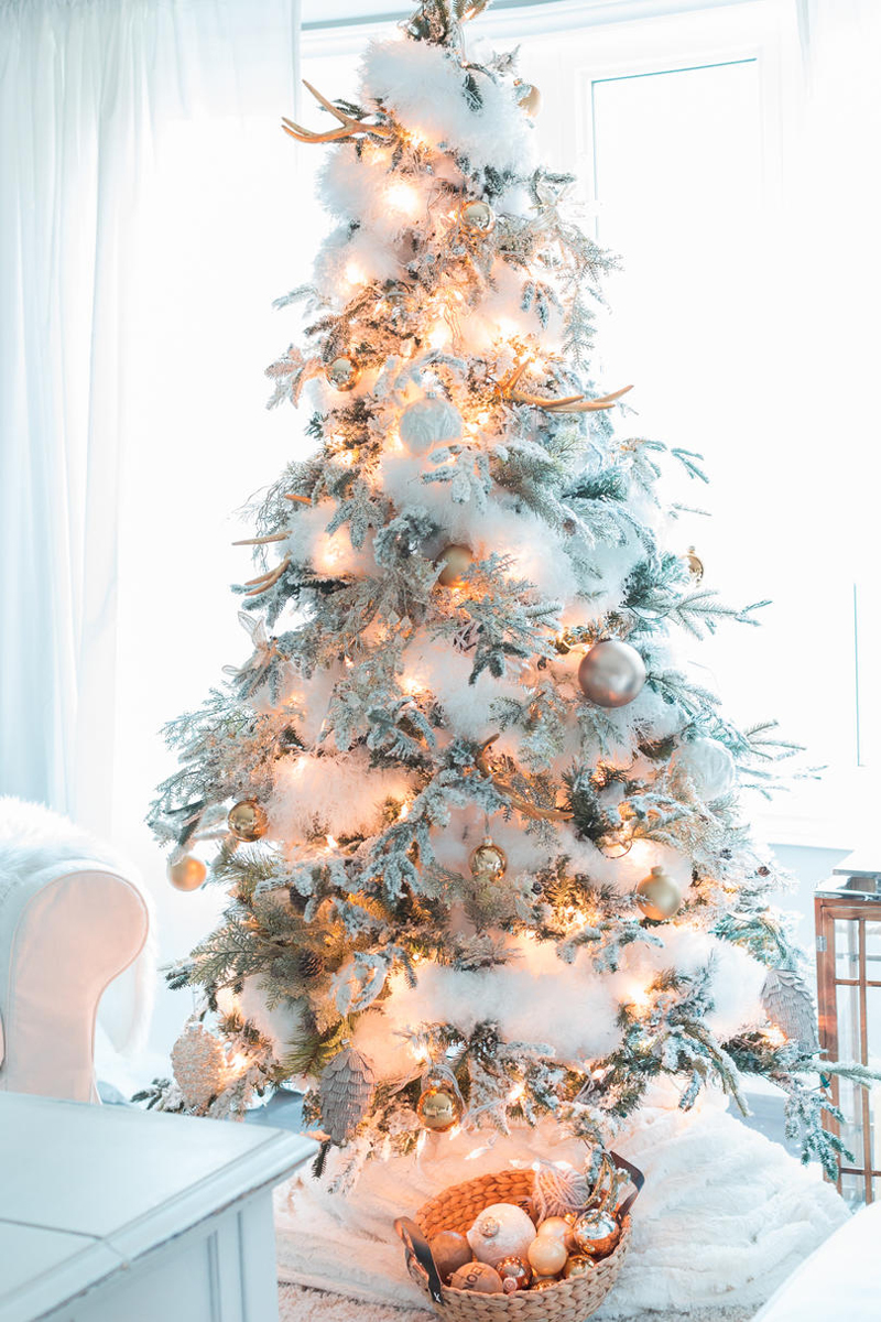 pinheiro natalino neves