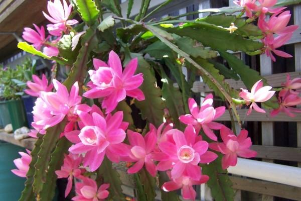 jardim de cactos e suculentas