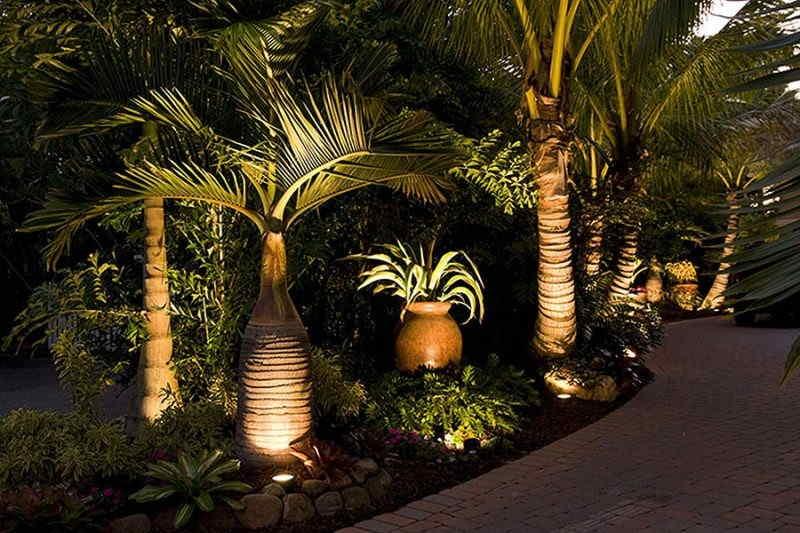 iluminacao-palmeira