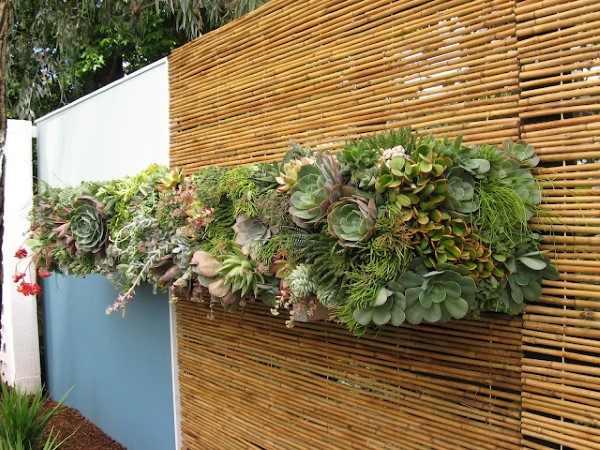 jardim vertical de suculenta