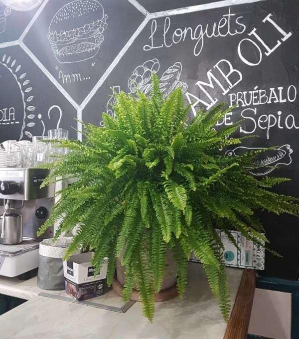 plantas para cozinha