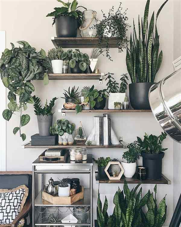 plantas para vasinhos