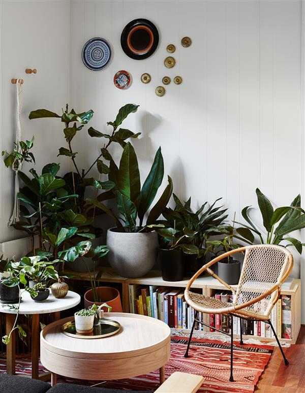 plantas para decorar apartamento