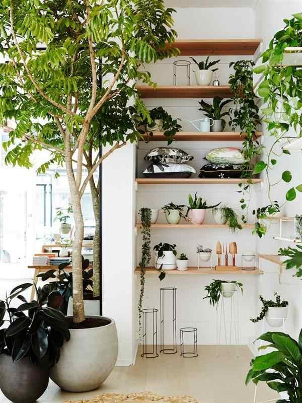 plantas ideias