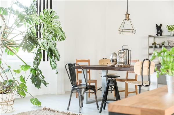casas lindas com plantas